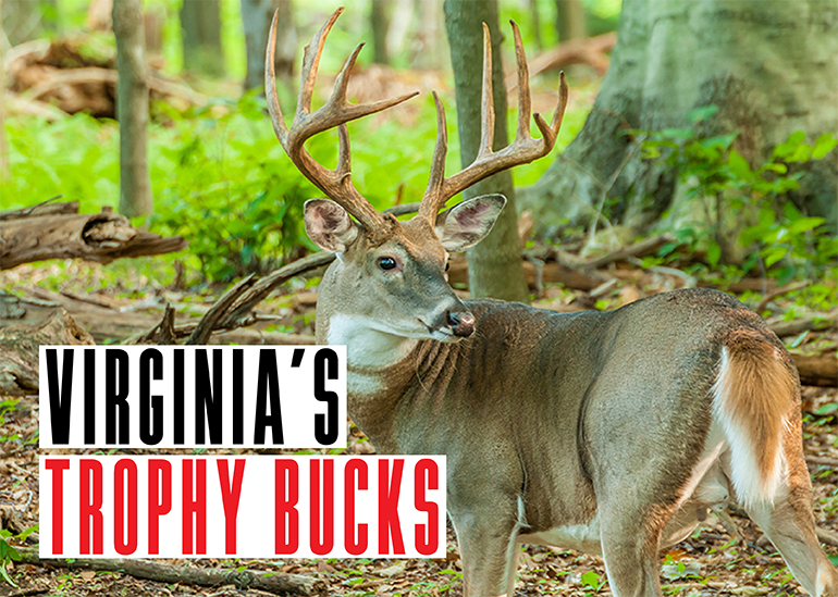 Every deer season, Virginia hunters take some awesome bucks. Here are the stories behind three from last season.