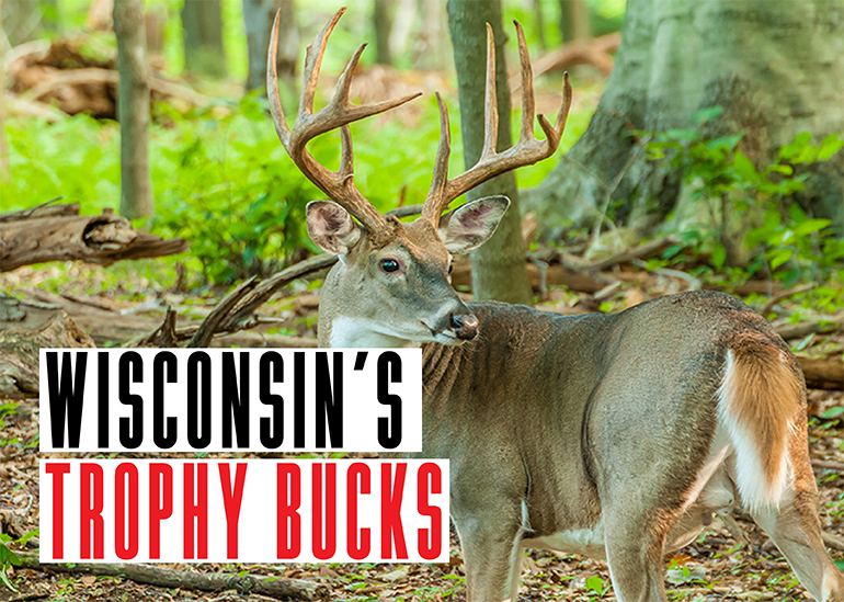 Every deer season, Wisconsin hunters take some trophy bucks. Here are the stories behind three from last season.