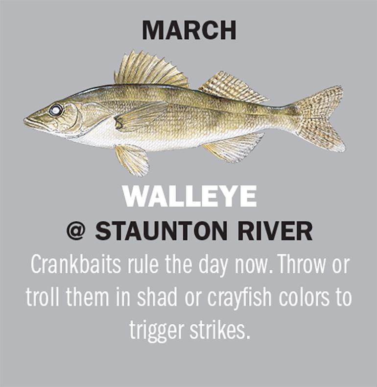 Virginia Fishing Calendar 2019