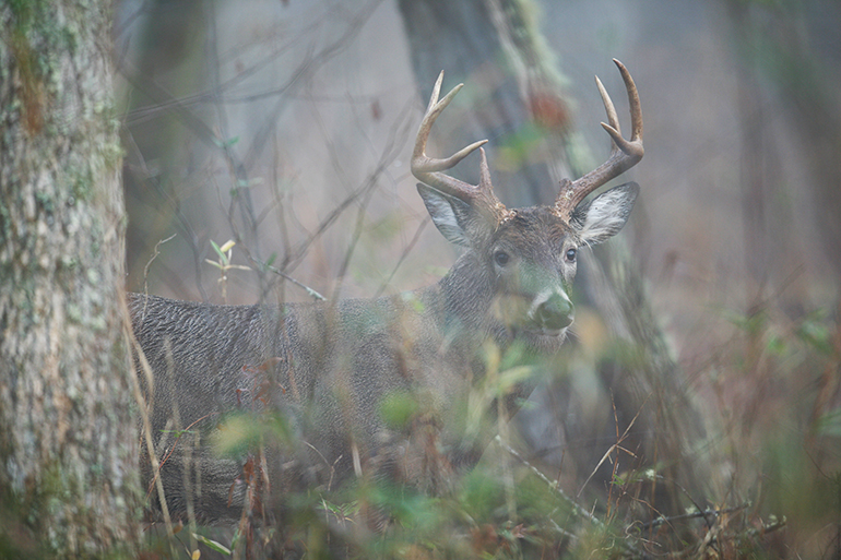 Wisconsin's Buffalo County has consistently produced loads of 'Booner' bucks over the past five years. So, how can you get in on the action?