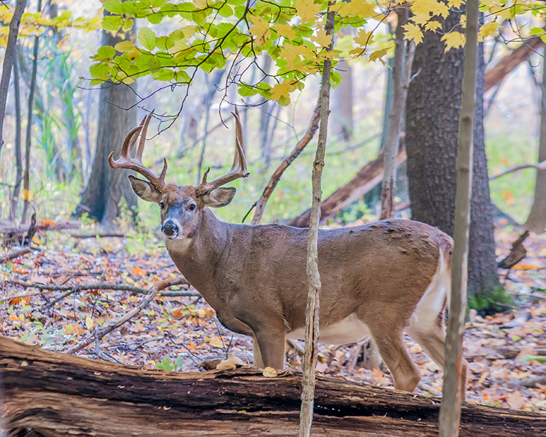 Fayette and Kanawha counties are the place in West Virginia for big bucks if you are up to the hike it takes to find them.