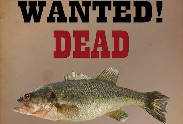 The report of a caught Alaska bass has the state scrambling to find out how it happened.