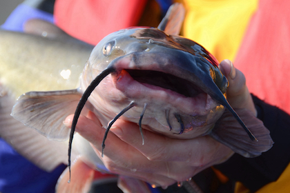 We found these unknown (and proven) catfish baits that attract whiskerfish time after time.