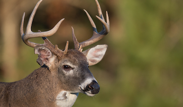 Now's the time to finalize plans for the perfect deer season opener.