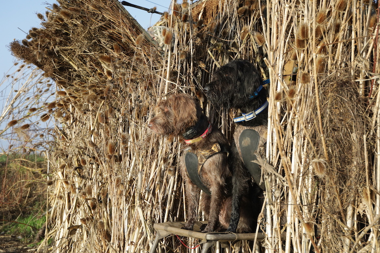 Fill Your Hunting Dog's Energy Demands
