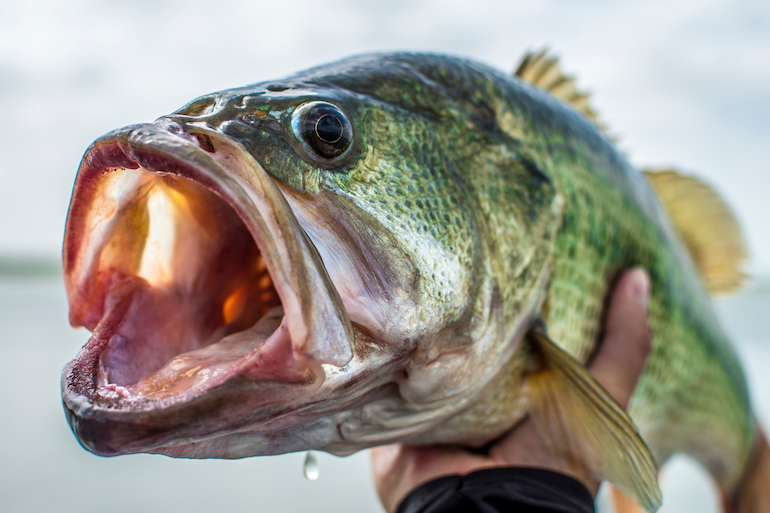 How to Battle Cold Fronts for Big-Chill Bass
