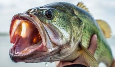 A cold weather front can put a major damper on the bass bite. Throw these lures to overcome the odds.