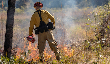 Fire is crucial for providing much-needed renewal and rejuvenation to forests and other ecosystems. but mismanagement can lead to devastating wildfires that do more harm than good.