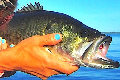 Despite Hurricane Irma's impact, Lake George still produces double-digit largemouths … if you know where to find them