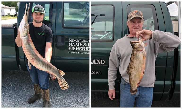 New record longnose gar was also reported in Virginia.