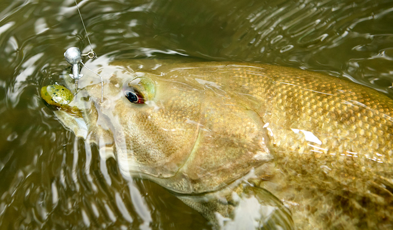 Destinations: 5 River Hotspots for Smallies in Mountain State