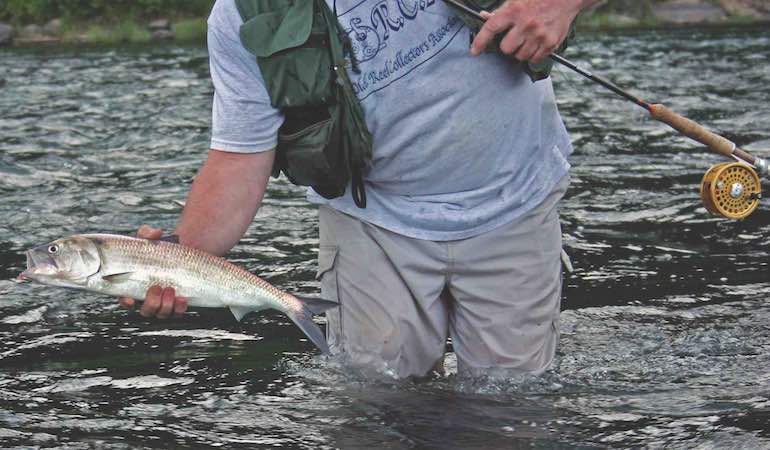 Understanding shad is key to finding them, no matter which river you're fishing.