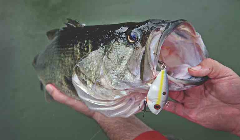 Crankbaits mimic exactly what they eat when hungry — other fish!