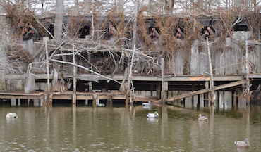 The attractive lure of duck hunting Beaverdam Lake and the Mississippi River.