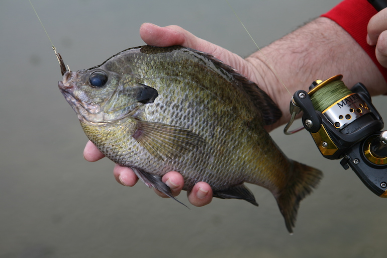 You can catch bluegill faster with these strategies.