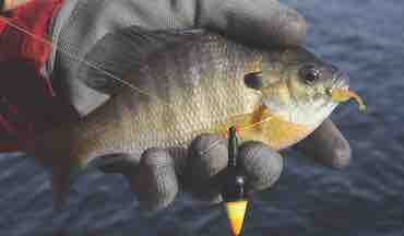 Maximize your panfish effort by simplifying your setup.