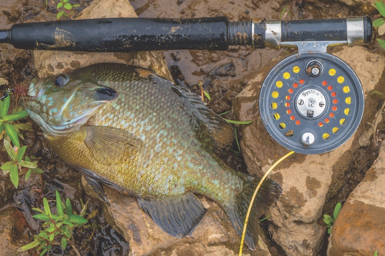 Triple Threat for Big Bream