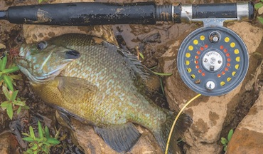 Use these three techniques to load your stringer with bluegills.