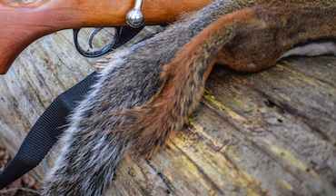 Want to bag more squirrels this season? Employ these tips the next time you head to the woods.