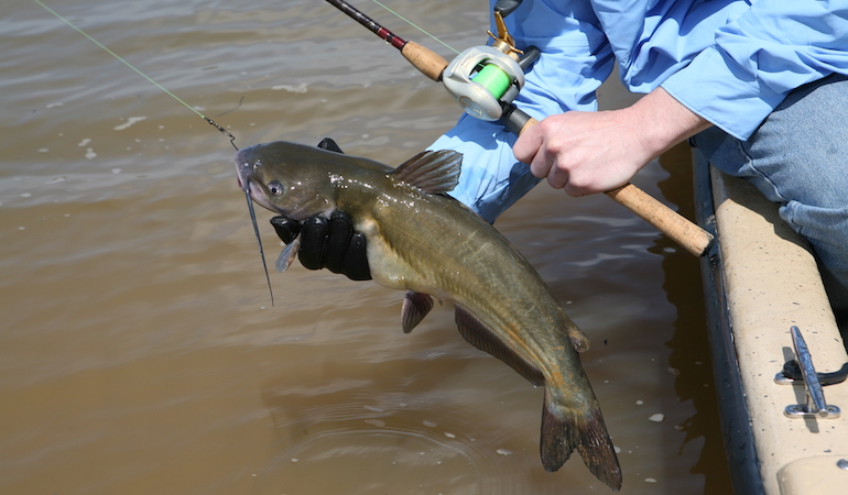 A well-planned and executed stationary approach can set the stage for outstanding summer catfishing action.