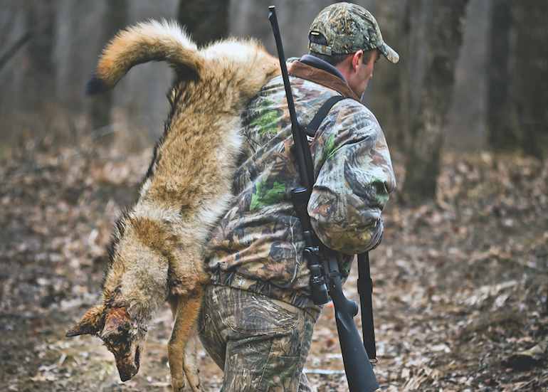 5 Tips to Better Coyote Hunting