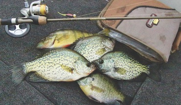 Adjust tactics to catch crappies from spring to summer.
