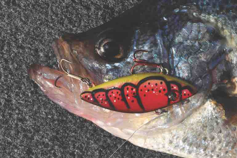 Crankbaits have overlooked potential for catching trophy crappie in spring.