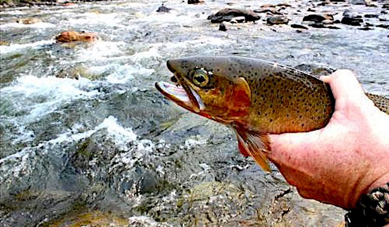 The Trout of Lewis & Clark