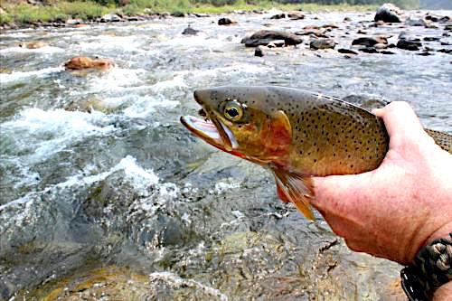 Rocky Mountain Cutthroat Slam