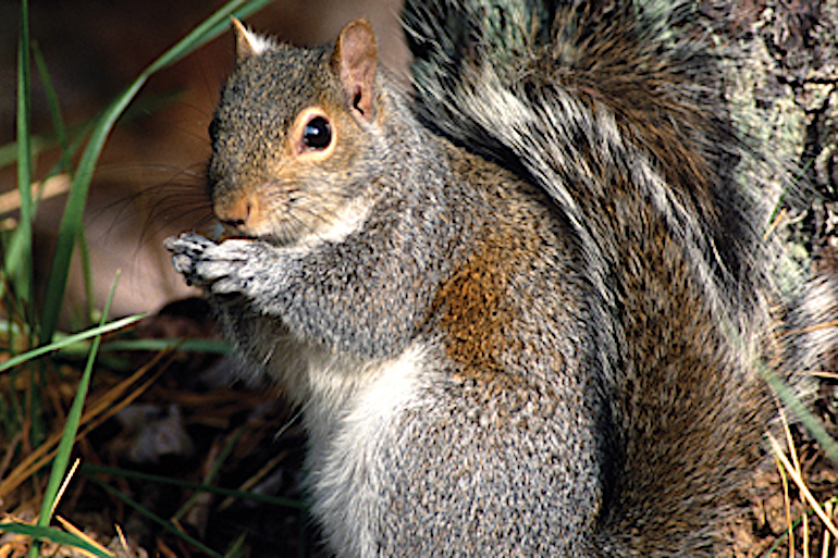 Double Down Tactics for Your Best Squirrel Hunt