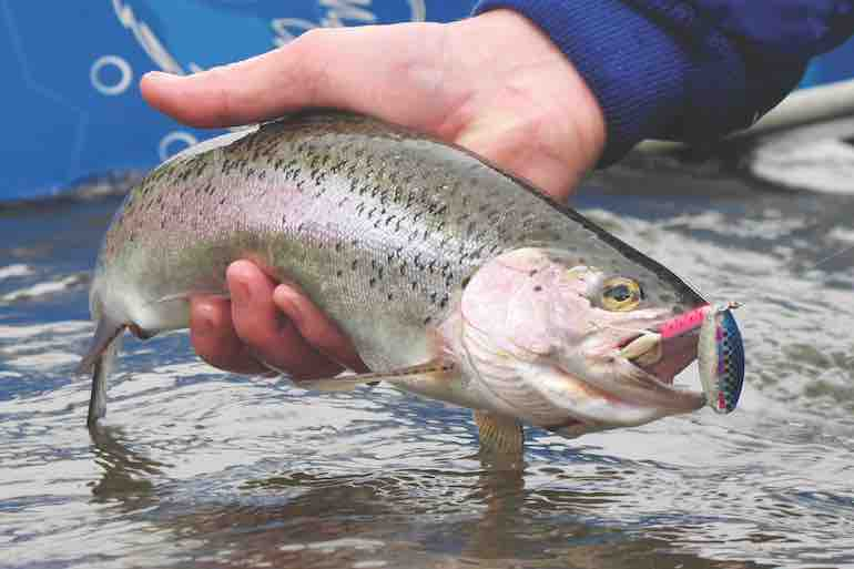 Public lands throughout the Northeast provide top-notch turkey and trout opportunities.