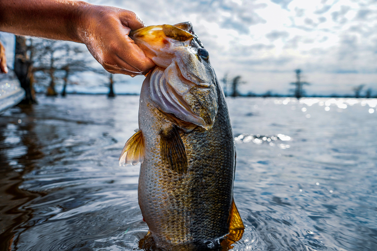 Go Big, Fast or With the Flow for August Largemouths