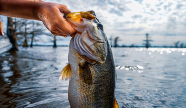 Try these 3 bass strategies during the hottest month of the year.