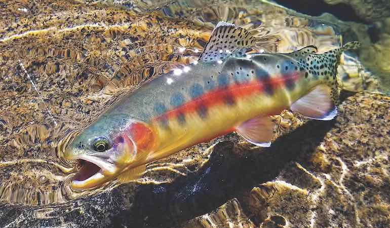 Hike in for trout treasure in these High Sierra lakes.