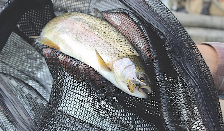 Make these adjustments to catch fall trout when conditions get challenging.