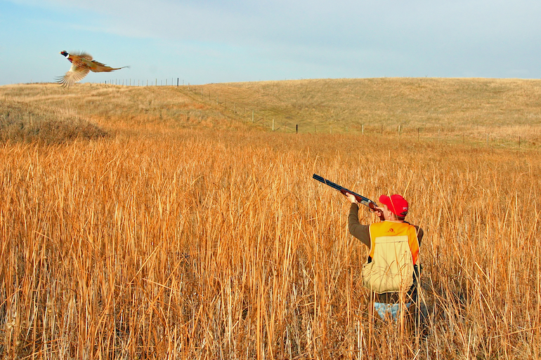 South Dakota Pheasant Hunters See Increased Opportunities