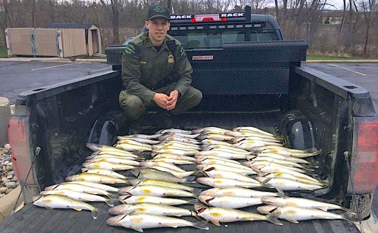 When asked how many walleye they had in the vehicle, the driver said,