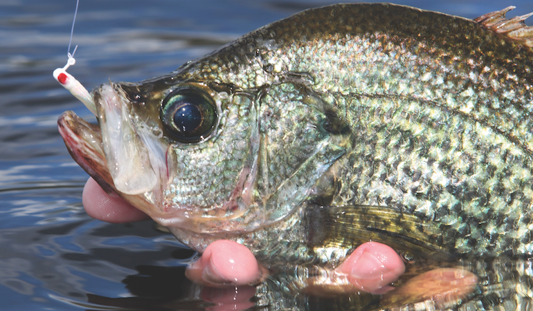 Want to get in on the early crappie bite now? Here are some of your best bets now and into spring.