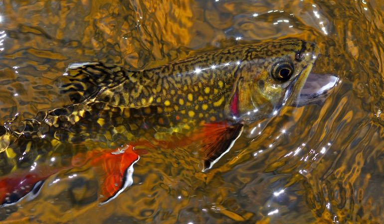 New England's Top Spring Trout Hot Spots