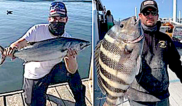 State approves new records for Atlantic bonito and sheepshead.