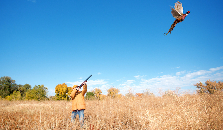 Be sneaky, hunt into the wind and know a rooster's routine.