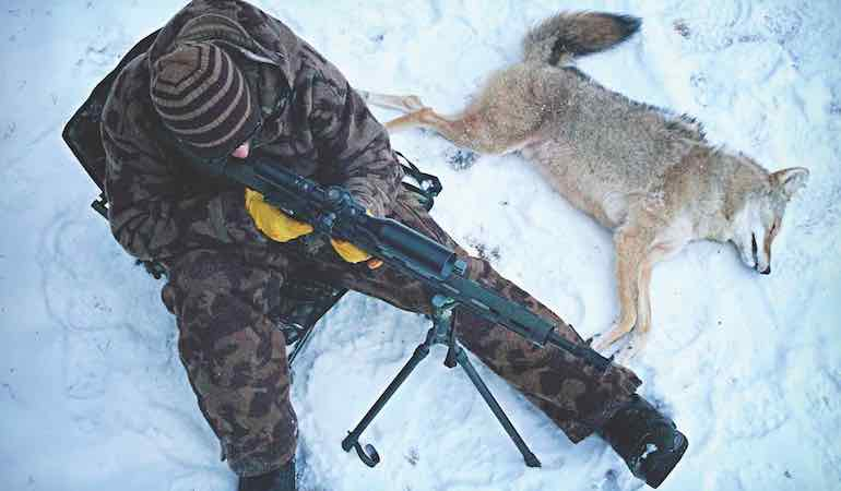 Many predator hunters fail at the outset with improper setups. Don't be one of them.