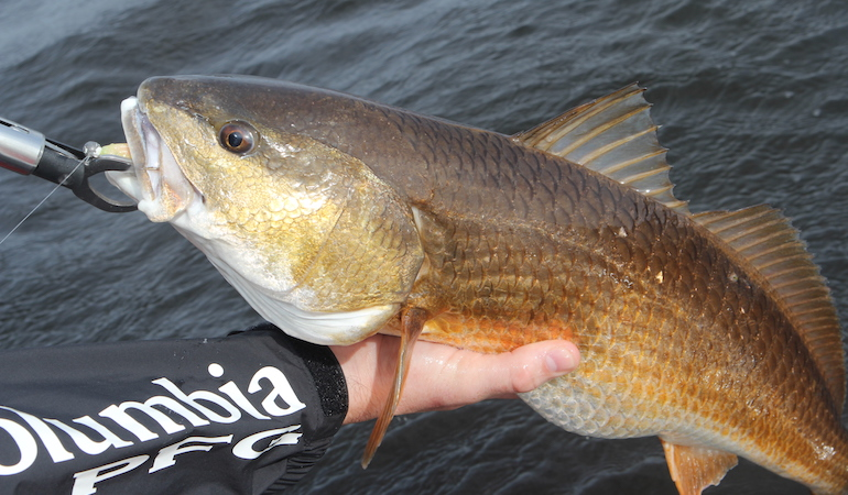 Spring kicks off saltwater fishing for most South Carolina anglers and the bite goes on into fall.