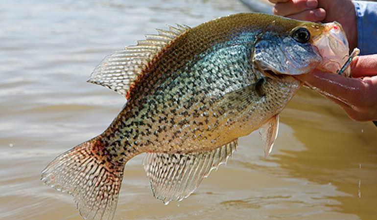 Use long-pole techniques to catch more shallow crappie this spring.