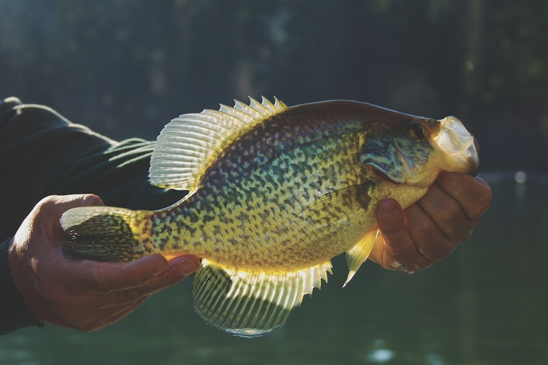 Follow these tips to find the best fish when crappies move to spawning cover.