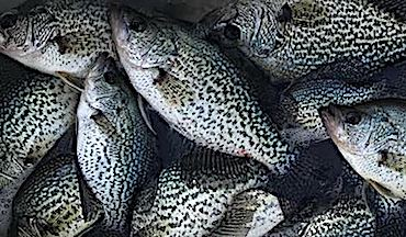Want to catch your best crappie ever? Try these top destinations to tangle with a monster.
