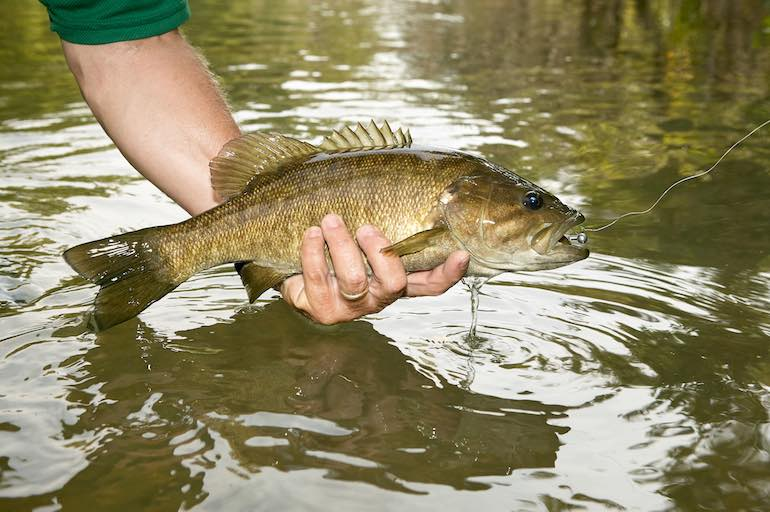 Adapt and adjust based on conditions to bring more smallies to the boat.