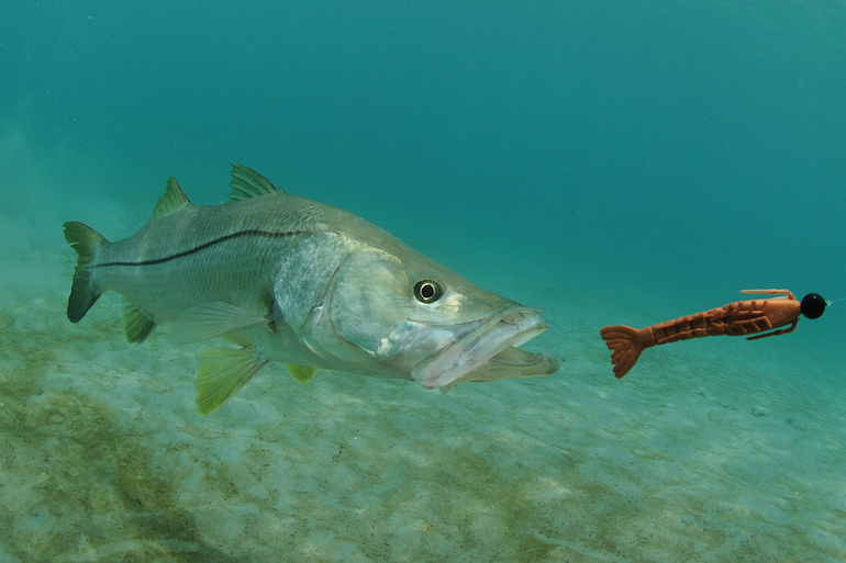 Florida's West-Coast Comeback for Bucket-List Snook