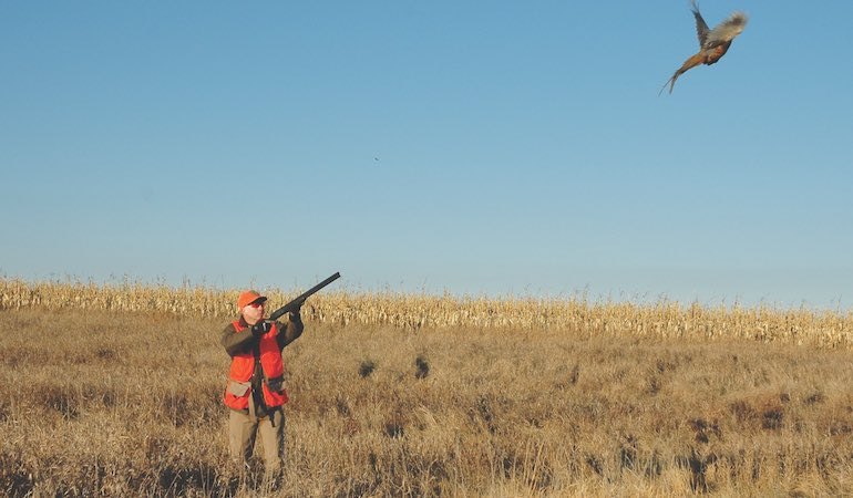 Lone pheasant hunters can find success if they get creative.