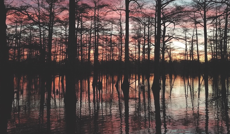 Southern Spots for the Duck Hunt of a Lifetime
